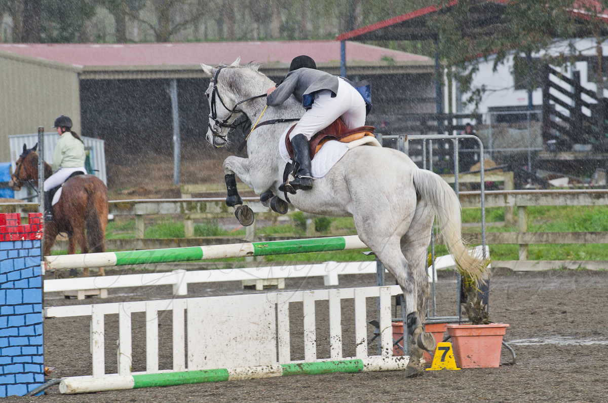 Show Jumping 37-4 Heavy Rain