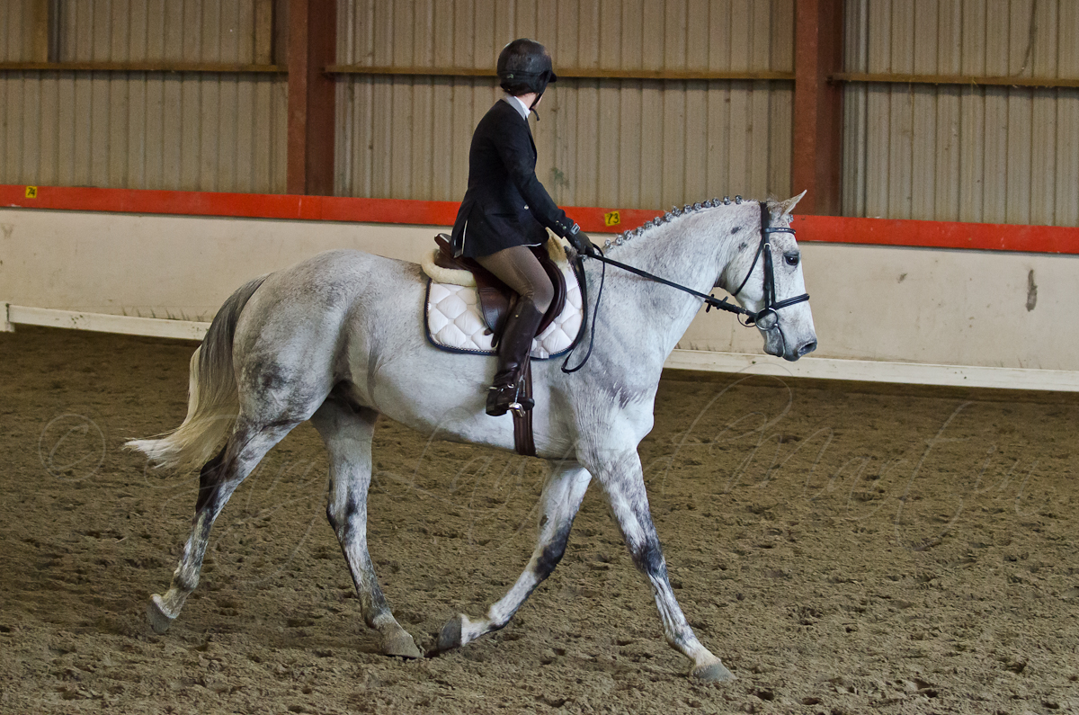 Indoor Dressage 22-15