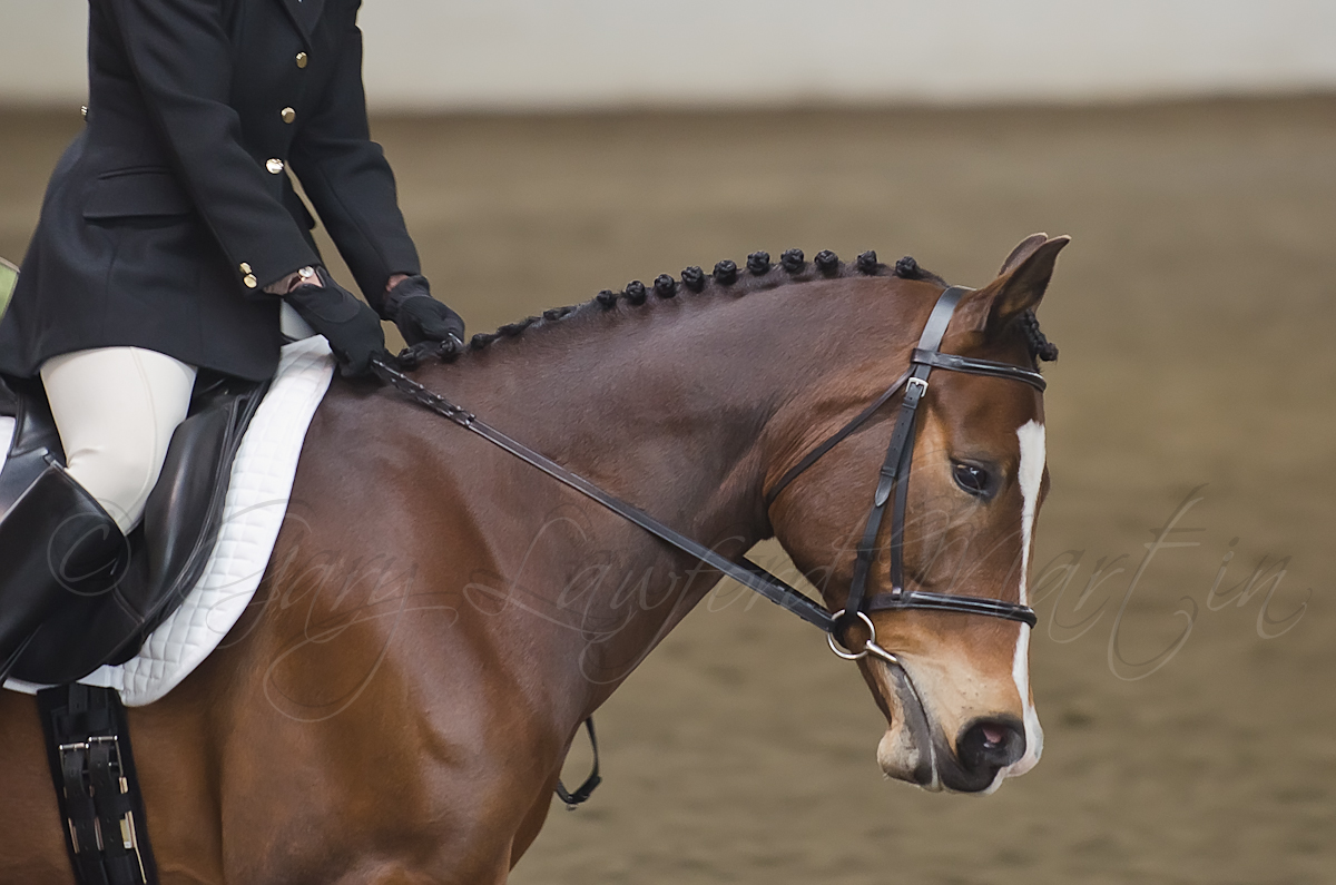 Indoor Dressage 6-10