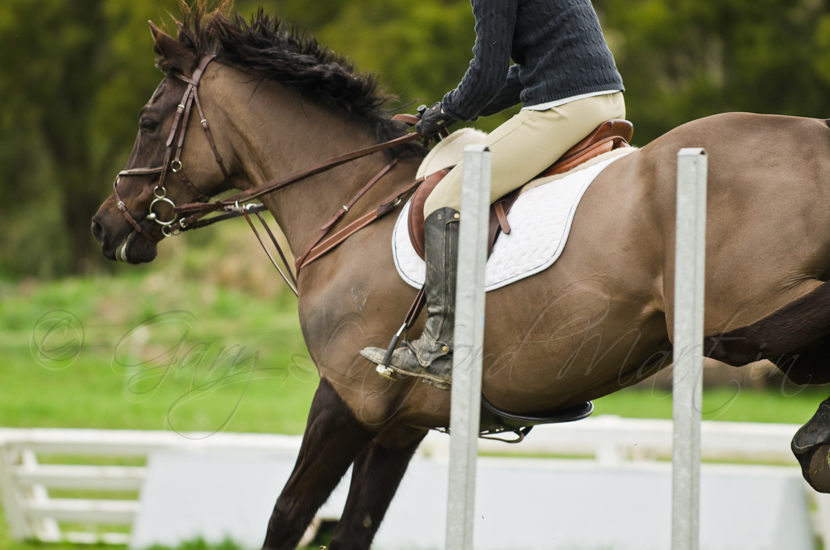 Show Jumping 14-26