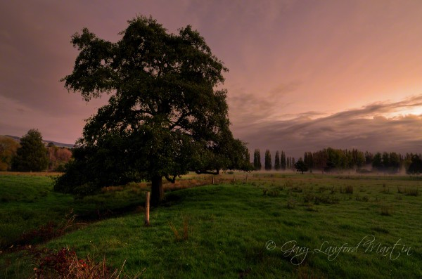Photo image of sunset fog in the Pohangina valley with tree subject