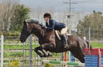 Show Jumping 33-11