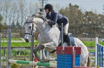 Show Jumping 36-17