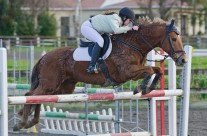 Show Jumping 49-24