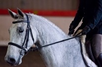 Indoor Dressage 22-2