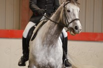 Indoor Dressage 8-6
