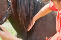 Bowen Horse Massage